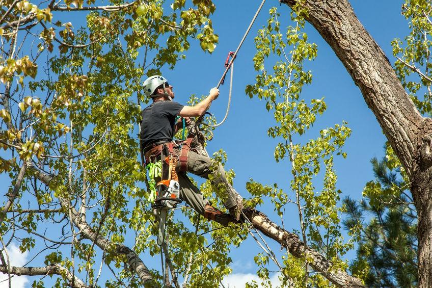 גוזם עצים מקצועי