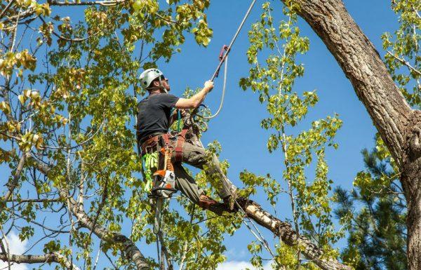 עצבו את הגינה – המדריך לגיזום עצים